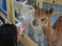 About Our Interactive Animal Experience